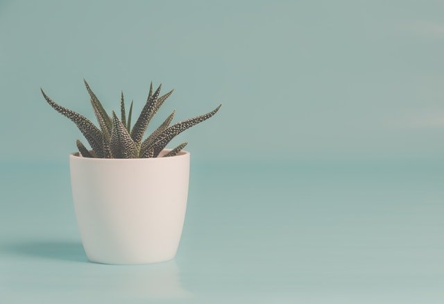 blue background with aloe plant
